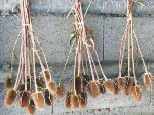 Plantes pour DIY