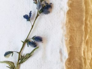 Fleurs d'HERBIER