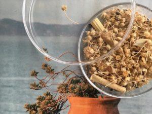 GRAINES de plantes tinctoriales