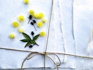 Plantes d'HERBIER