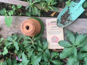 Tout pour réussir un jardin POTAGER